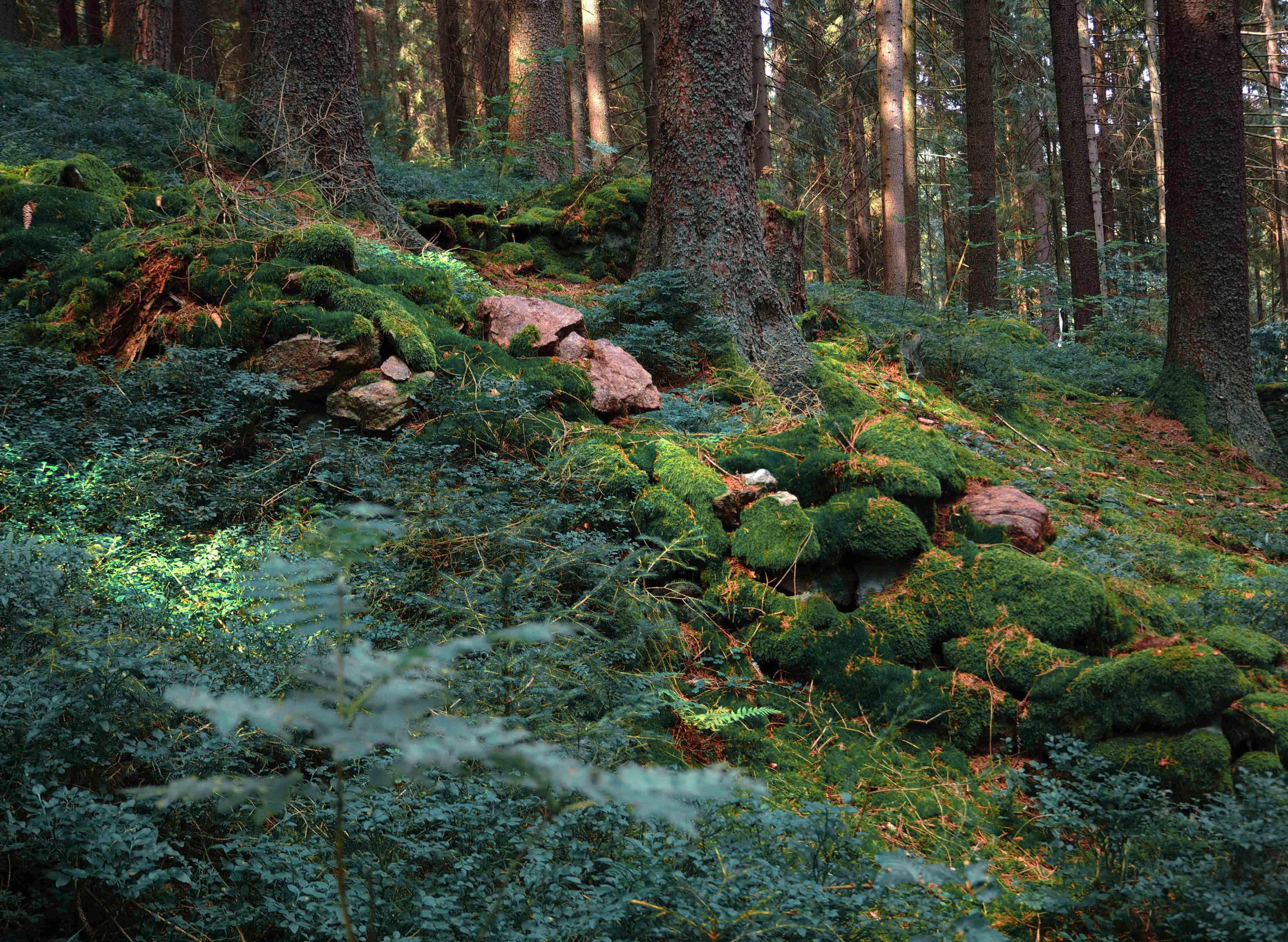 blog z lesa