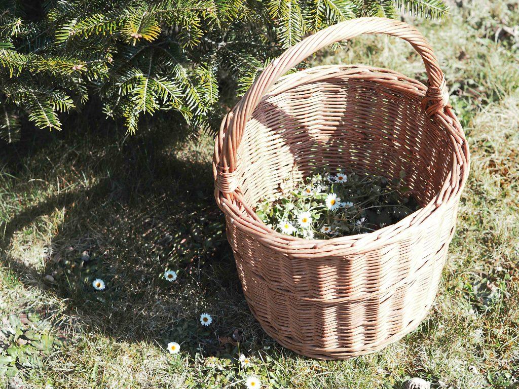 bylinky divoké jarní